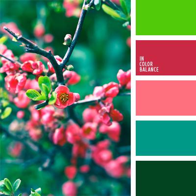 Светлая вишня цвет